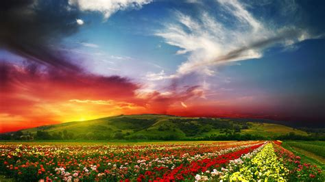 wallpaper india   wallpaper valley  flowers