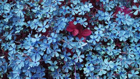 wallpaper blue floral blue flowers wallpaper wallpaper wide hd