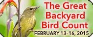the great backyard bird count crows ravens and the great backyard bird count