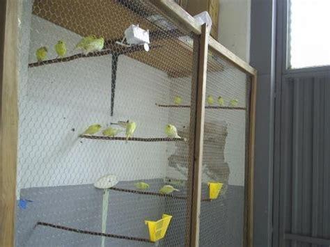 razas de canarios en venta wwwsemilleriaebjcom fotos de venta de canarios de canto guip 250 zcoa animales