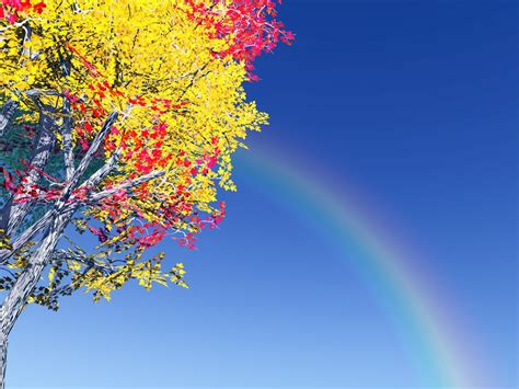 colorful tree colorful tree and rainbow wallpaper allwallpaper in