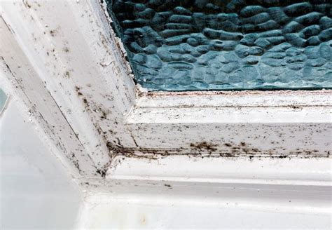 How To Remove Black Mold From Walls Howtoremoveblackmold Best 25 Remove Black Mold Ideas On Bathroom Mold Remover Bathroom Mold And How