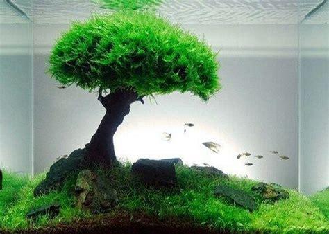 jenis tanaman aquascape mudah dipelihara bikin aquarium