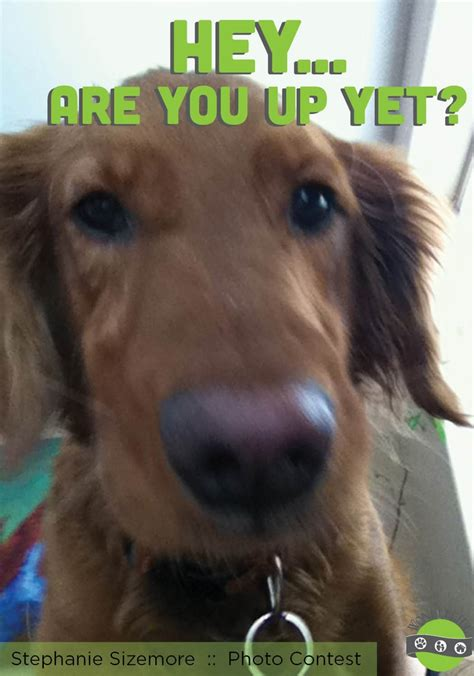 what are golden retrievers like pin by wondercide products on wondercide community photos p