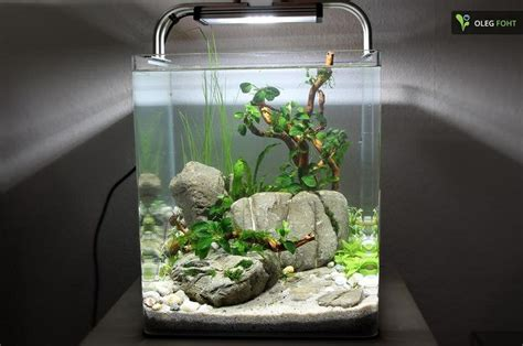 nano aquascapes aquascaping aquarium