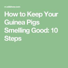 how to keep your house smelling good with a dog guinea pig girl names guinea pig inspiration pinterest pets girls and guinea pigs