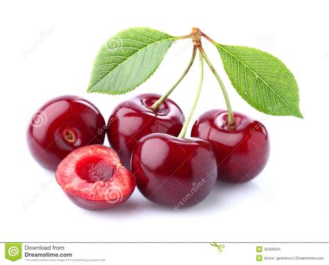 Cherry On White cherry on a white background stock image image 45309541