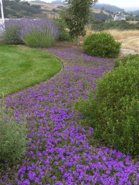 flowering ground cover home design ideas pictures remodel and decor