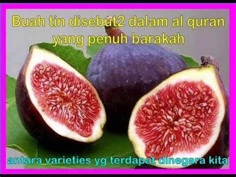 Dried Fig Buah Tin Buah Ara 1kg buah tin di malaysia doovi