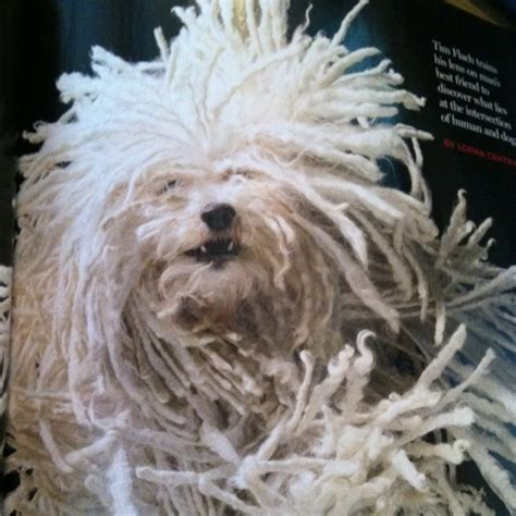 mop puppies komondor it looks like a mop images frompo