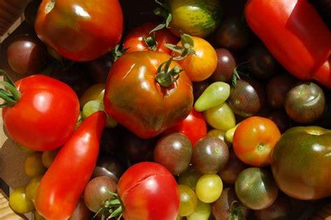 cuisiner des tomates s馗h馥s 1492 christophe colomb d 233 couvre les l 233 gumes
