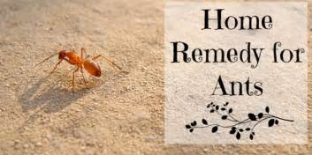 what kills termites home remedies some of the best home remedies for ants top