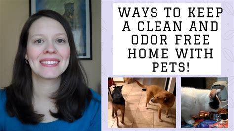 how to keep house how to keep a clean and odor free home with pets how to