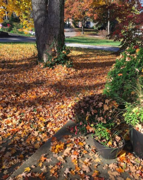 Fall Cleanup With All Lawn Care Service Mad Money Coupon Fall Cleanup Landscaping