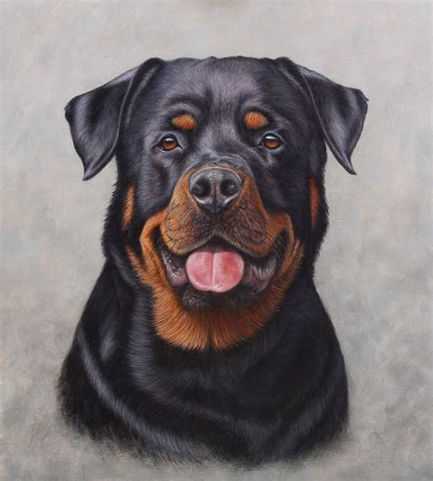 rottweiler similar rottweiler portraits breeds picture