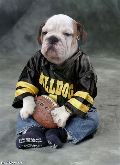 bull dogs bulldogs fan pictures freaking news
