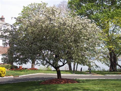 ny city tree million trees new york city frogs are green