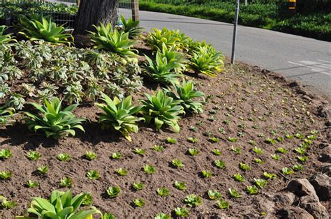 pacific horticulture society succulent landscaping