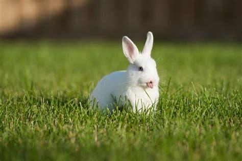 coniglio da appartamento linguaggio dei conigli felicit 224 e paura tutto ze