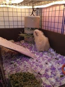 25 best ideas about guinea pig bedding on