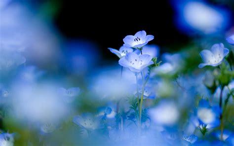flowers in light image gallery light blue flower wallpaper