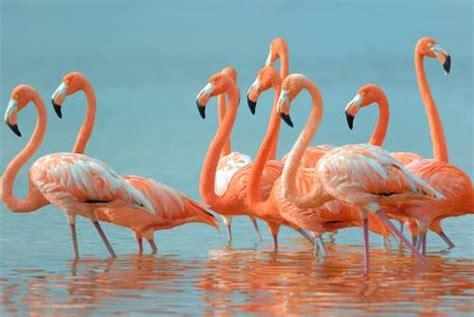 testo il re il re e i fenicotteri rosa i testi della tradizione di