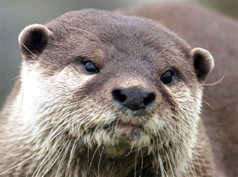 otters home
