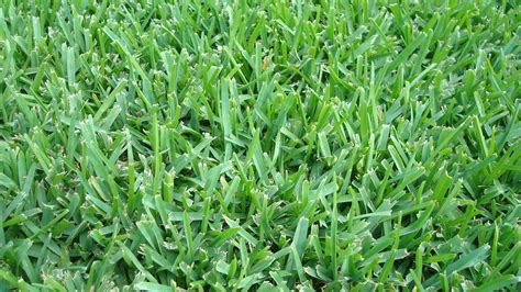which type of grass should i plant in orlando