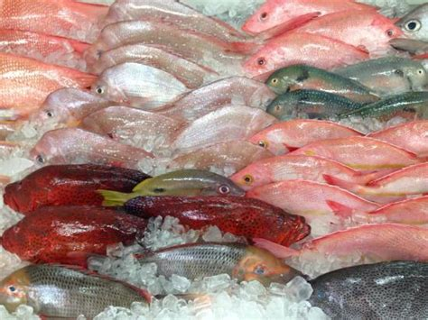Fish For Shedding by Reef Fish Fresh As You Can Get Picture Of Shed