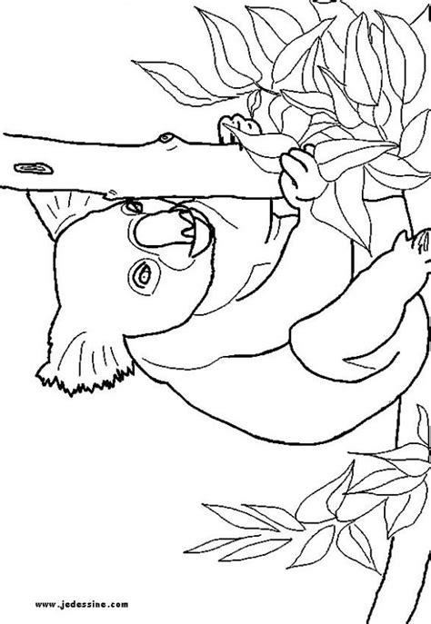 dibujos infantiles koala dibujos para colorear un koala es hellokids com