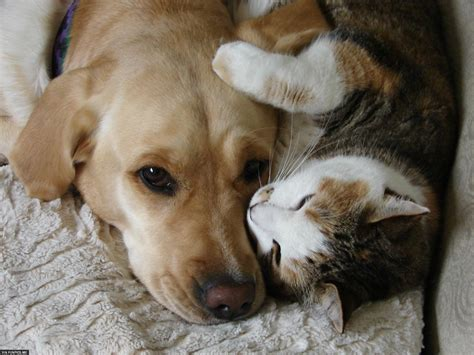 puppies and friends 16 pictures of cats and dogs being the best friends in the world