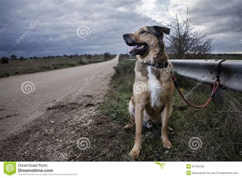 abandoned dogs abandoned dog stock photo image 51184184
