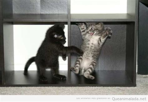 imagenes de niños jugando al gato y al raton peque 241 os archivos