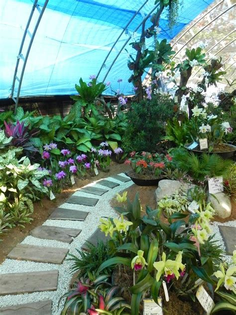 Landscape Architecture Philippines Our Philippine Trees And They Said You Can T Landscape