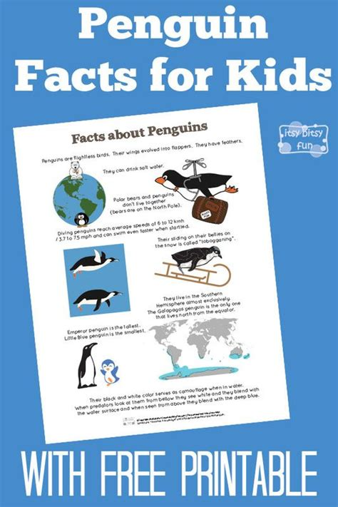 printable animal fun facts penguin facts for kids for kids facts and kid
