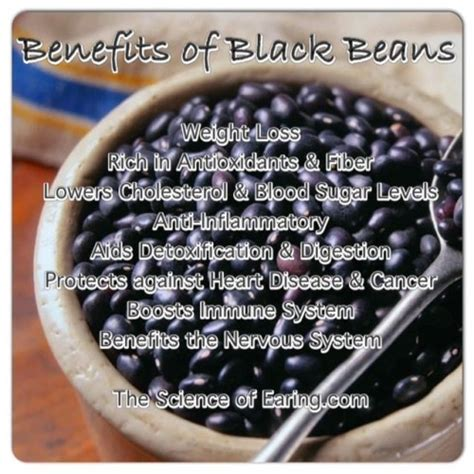 can dogs eat black beans benefits of black beans