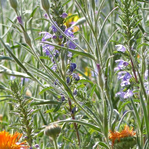 hof berg garten onlineshop sommerblumenmischung floriane i blumenwiesenmischung