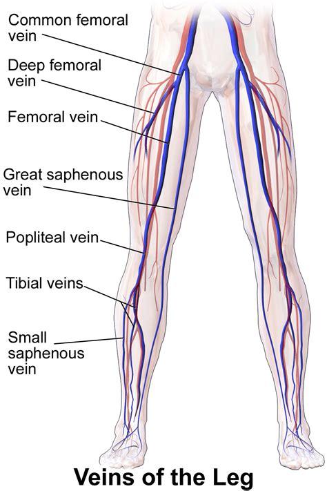 In Vein vein thrombosis dvt dallas fort worth tx