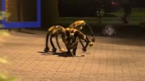 spider puppy spider images usseek