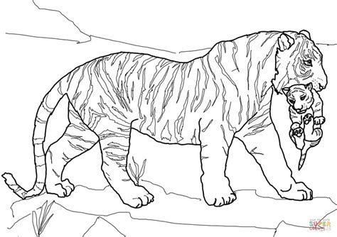 mother tiger carrying cub coloring page free printable