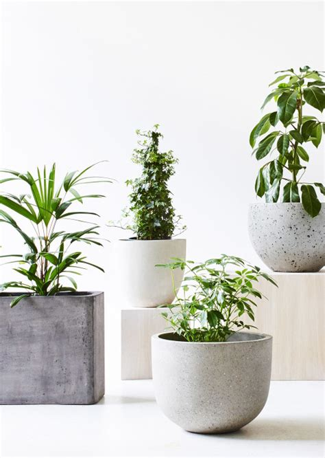 Planters Australia by Indoor Garden Living With Plants The Design Files
