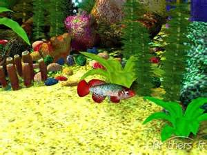 Download free free 3d aquarium screensaver free 3d aquarium