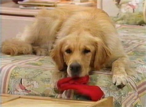 dog on full house comet full house fandom powered by wikia