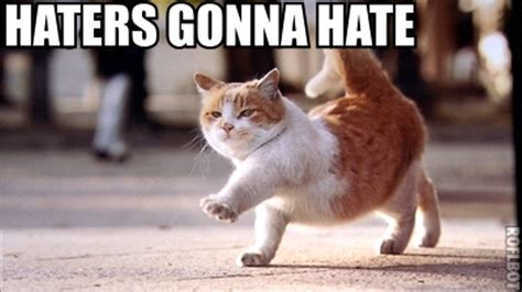 Hate Meme - 13 best hate comments of 2013 young adventuress