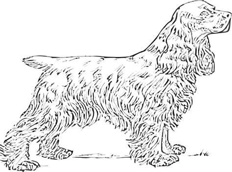free coloring pages of cocker spaniel