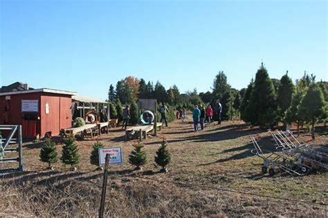 u cut christmas tree farms in petaluma marin mommies