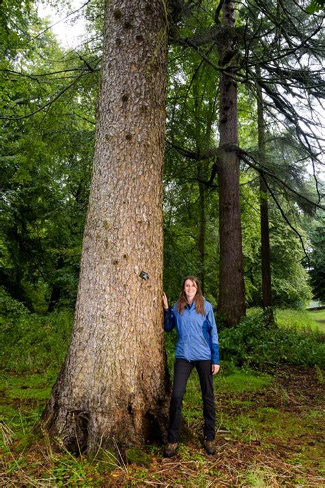 hopetoun house trees woodland trust tree of the year hopetoun