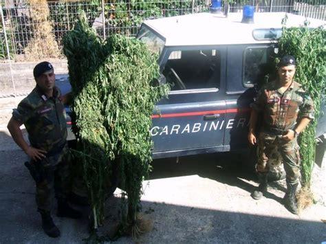 canapé italien pub tv marijuana made in calabria 6 arresti e 3 denunce