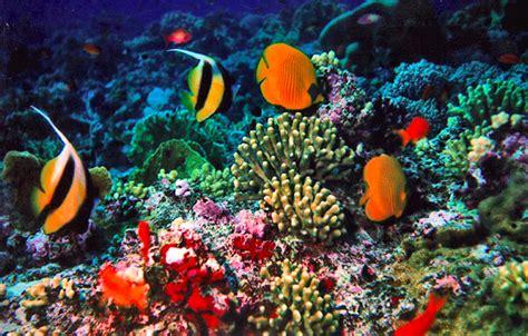wallpaper keindahan alam bawah laut 5 wisata laut eksotis di indonesia mandalahunter