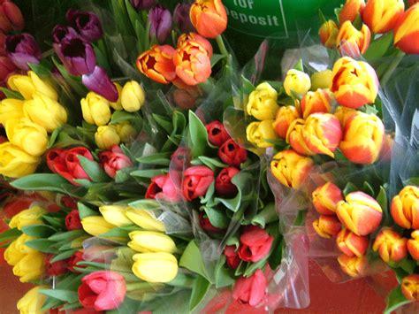 cut tulips at herridge s